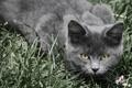 Картинка трава, серый, охотник