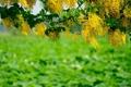 Картинка зелень, макро, цветы, дерево, ветка, желтые, размытость