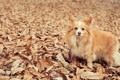 Картинка листья, глаза, leaves, dog, Собака, eyes
