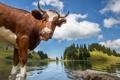 Картинка деревья, пейзаж, горы, озеро, корова, Швейцария, рога