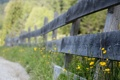 Картинка дорога, цветы, забор