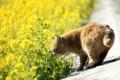 Картинка дорога, кошка, кот, цветы, природа, желтые, рыжий