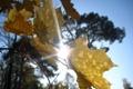 Картинка листья, осень, солнце