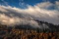 Картинка деревья, облака, небо, холм