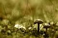 Картинка зелень, трава, макро, природа, земля, гриб, растения