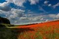 Картинка поле, лес, небо, облака, деревья, цветы, маки