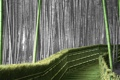 Картинка цвет, бамбук, лестница