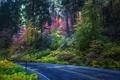 Картинка дорога, лес, деревья, обработка, США, кусты, Sequoia National Park