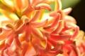 Картинка цветок, оранжевый, природа, гиацинт