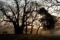 Картинка пейзаж, закат, дерево, скамья