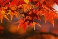 Картинка осень, листья, макро, ветки, природа, дерево, ветви