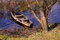 Картинка река, дерево, лодка, цепь