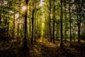 Картинка листья, дорожка, осень, деревья, солнце, лес