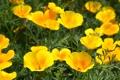 Картинка лето, макро, цветы, природа, настроение, желтые