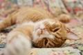 Картинка кошка, кот, мордочка, рыжая