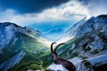 Картинка горы, животное, козел, долина, Mount Pilatus