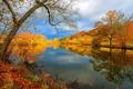 Картинка осень, пейзаж, природа, озеро