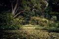 Картинка деревья, цветы, лилии, кусты, водоем, апрк