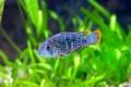 Картинка водоросли, аквариум, рыба, размытость, цветная