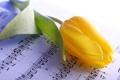 Картинка желтый, ноты, тюльпан, стебель, бутон, тетрадь, крупным планом