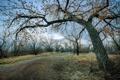 Картинка Colorado, Winter, Riverside Park, Cottonwood Trees