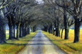 Картинка дорога, деревья, картина