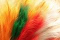 Картинка желтый, белый, оранжевый, зеленый, перья, цвета, красный