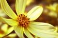 Картинка цветок, макро, лепестки, цветение