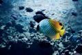 Картинка рыбки, яркая, тропические, вода, рыба