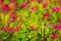 Картинка цветы, птица, растение, крылья, клюв, колибри