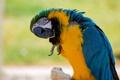 Картинка птица, попугай, клюв, перья, краски