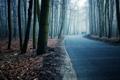 Картинка дорога, лес, деревья, весна