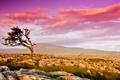 Картинка небо, камни, дерево, долина