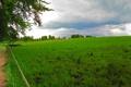 Картинка пейзаж, природа, зеленый, Германия, лошади, луг, Bavaria
