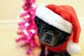 Картинка праздник, взгляд, собака