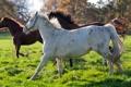 Картинка трио, хвост, загон, бег, кони, профиль, лошади