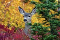 Картинка дерево, животное, олень, ушки