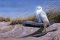 Картинка песок, птицы, сова, бревно, живопись, сухая трава, Against the Wind
