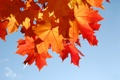Картинка осень, Sweet November, листва