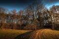 Картинка трава, деревья, природа, фото, дерево, красивые обои для рабочего стола