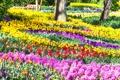 Картинка цветы, парк, тюльпаны, Нидерланды, солнечно, разноцветные, красивые