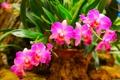 Картинка листья, лепестки, орхидея, оранжерея