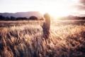 Картинка девушка, поле, свет