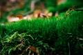 Картинка зелень, трава, зеленая