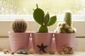 Картинка цветы, окно, кактусы, ракушки, подоконник, горшки