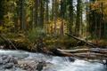 Картинка лес, деревья, река, поток, river