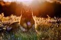 Картинка друг, свет, собака