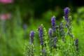 Картинка поле, цветы, пчела, растения, луг, насекомое