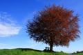 Картинка небо, пейзаж, дерево, скамья