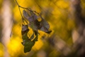 Картинка листья, осень, боке